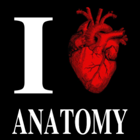 I Heart Anatomy - T-shirt